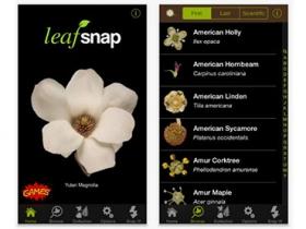 LeafSnap:可辨識植物的 app